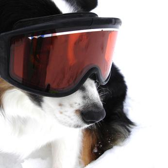chien avec masque de ski - sports d'hiver