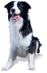 Contre quelles maladies vacciner votre chien ?