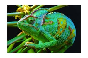 Identification des animaux d'espèces inhabituelles