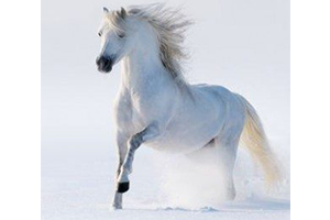 Read more about the article Physiologie du cheval