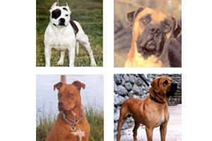 La loi sur les chiens dangereux