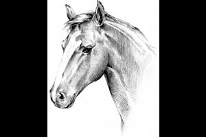 La visite d'achat du cheval