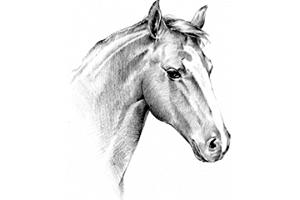 La gale du cheval