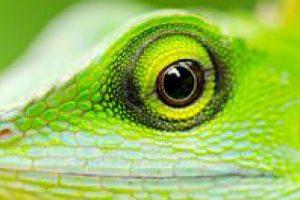 L'alimentation des reptiles herbivores