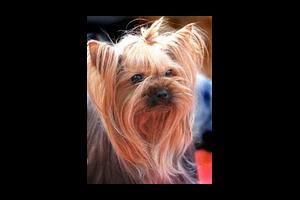 Hygiène de votre chien  : la peau et le pelage