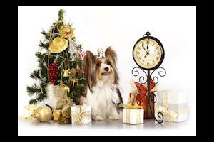 Décors de fêtes : éviter les dangers pour nos animaux domestiques