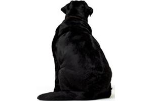 Le surpoids chez le chien : quelles conséquences ?