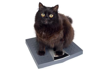 Stériliser son chat ou sa chatte ?