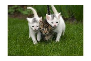 Nouvelle règlementation concernant l'identification du chat