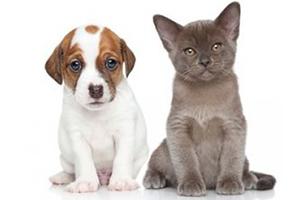 Les nouvelles conditions de vente des animaux domestiques