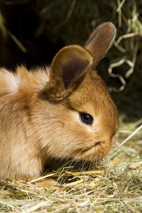 the baby rabbits