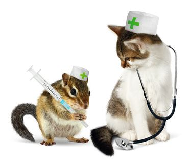 Veterinary concept, funny chipmunk and cat with phonendoscope a