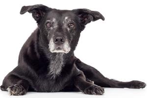 La chimiothérapie pour nos animaux de compagnie