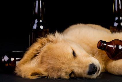 chien couche bouteilles alcool-exces