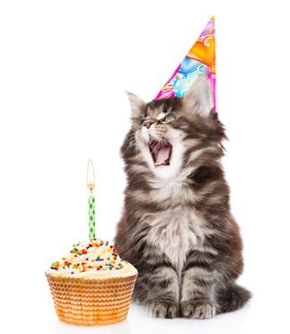 chat avec chapeau et gateau d'anniversaire-age