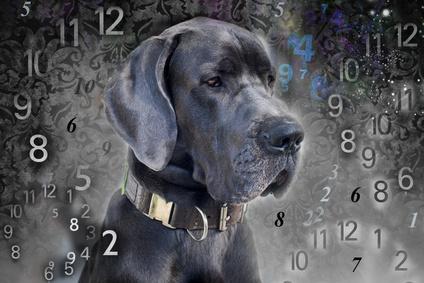 portrait d'un chien entouré de nombres-age