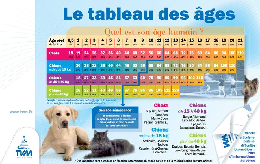Question D Age Chien Et Chat Alliance Vet Conseils Veterinaires
