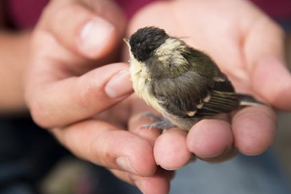 oiseau tenu dans une main-animal errant