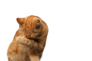chat se frottant l'œil avec patte