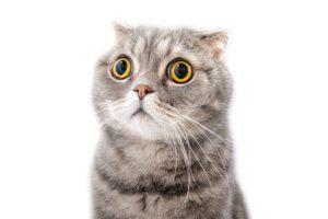 Résultat de recherche d'images pour 'chat'