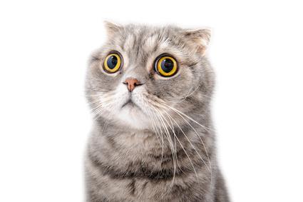 Mon chat a un œil qui coule…