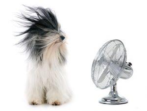 chien face à ventilateur-troubles estivaux