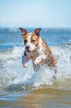 chien sautant dans la mer-troubles estivaux