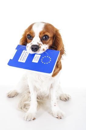 passeport tenu dans gueule d'un chien-nouvelle annee