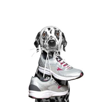 dalmatien tenant chaussures de sport en gueule-nouvelle annee