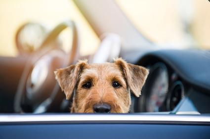 museau chien derriere vitre voiture-quiz