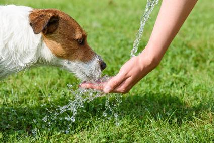 chien buvant dans un main d'homme-quiz