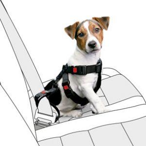 chien harnais voiture - cadeau noel chien chat