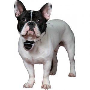camera collier - cadeau noel chien chat