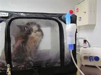nebuliseur cage - aerosoltherapie