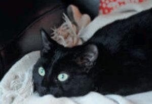Malpropreté urinaire du chat : Thérapies comportementales