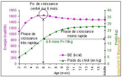 graphique-croissance-chiot