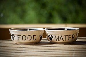 Alimentation d'un chien ou d'un chat souffrant d'insuffisance rénale