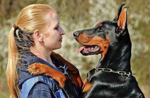 Faut-il repousser le chien qui demande un câlin ?