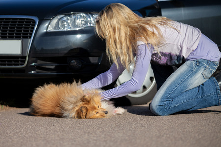 un chien accidenté par une voiture