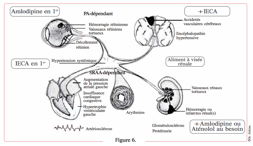 croquis-organes-touches-hypertension-chat