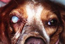 oeil brulure chimique cornee - œdeme corneen