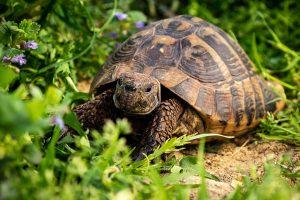 Ma tortue d'Hermann et moi