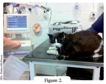 chat sur table pour ecg - arythmies cardiaques