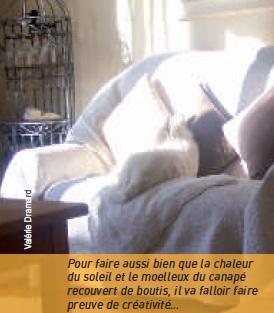 chien dans canapé au soleil