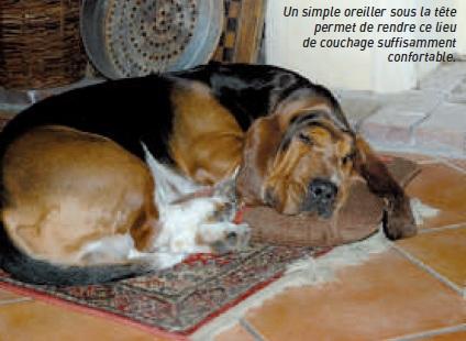 chien sur tapis au sol - descendre du canape