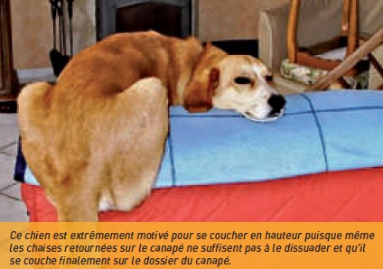 chien couche canapé