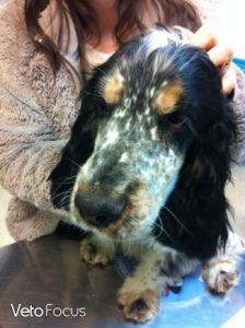 truffe chien guerie - aromatherapie dermatologie veterinaire
