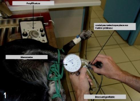 appareil mesure doppler - pression arterielle