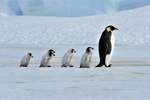 Quiz de fin d'année : les animaux de l'hiver !