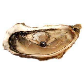 Photo d'une huître
